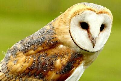 Essence Transmission - Animal Totem Energy