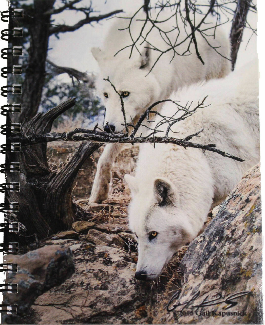 Notebook - Teton & Shasta