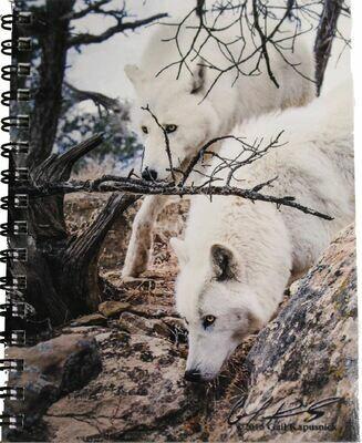 Notebook - Teton & Shasta