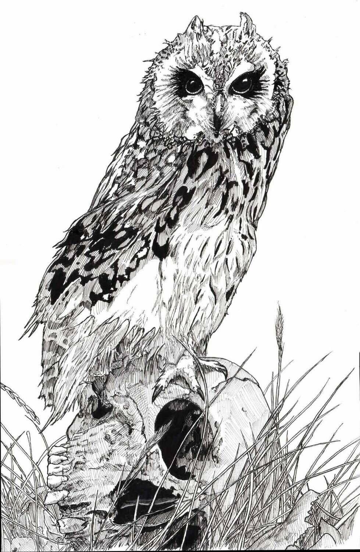 Owl Skull Drawing Print