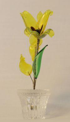 Pot Plants - Yellow
