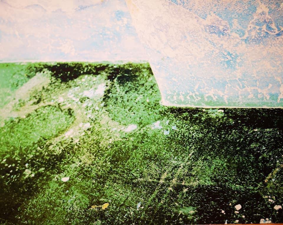"""Green Amazonas"" JAN"