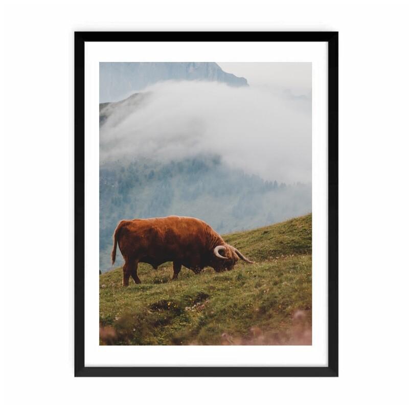 """Highland Cow"" Fotografi m/ramme"