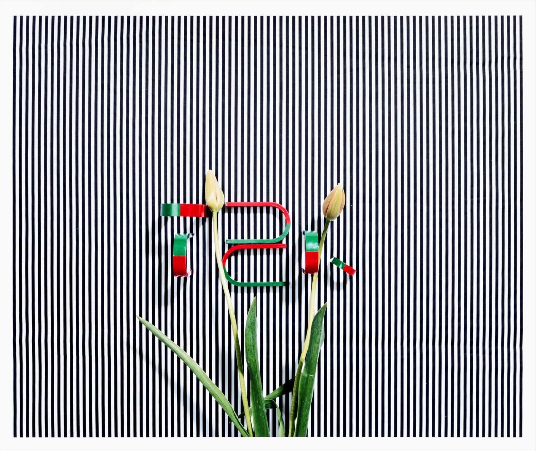 Annette Kelm (German b.1975), 'Untitled (TZK)', 2013