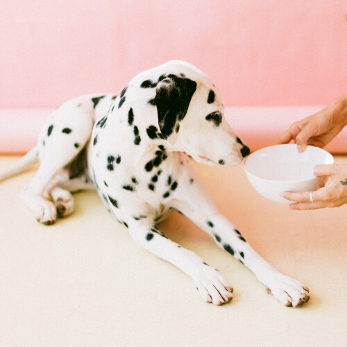 Recipe Formulations for a Healthy Adult Dog