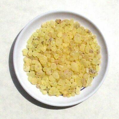 Gum Mastic 1/4 oz pack