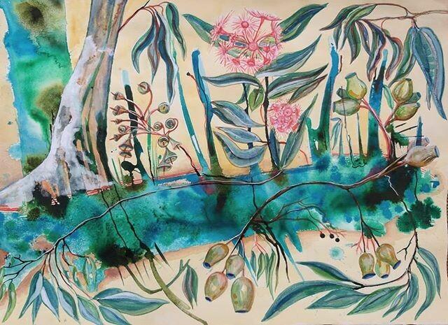 Eucalyptus Gumnut Flowers