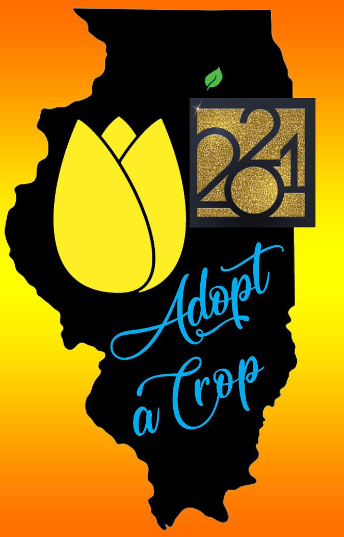 Adopt-a-Crop TULIPS
