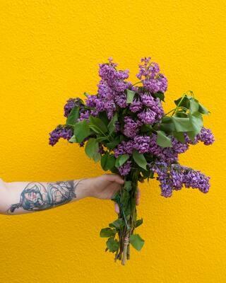 Bunch'a Lilacs