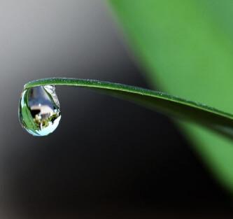 антицеллюлитный бальзам из трав