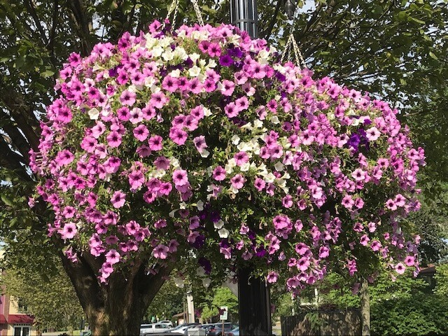 Beautify Hightstown Flower Basket
