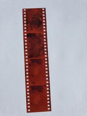 Development of a 135 negative colour film - 35mm format