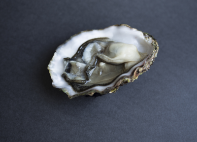 Blanc Oyster Series | Stay Home Special