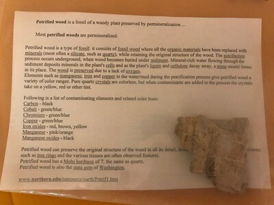 Petrified Wood/Limb Casts