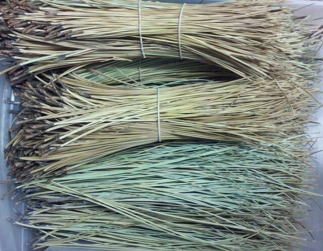 Pine Needles (3+ oz ea)