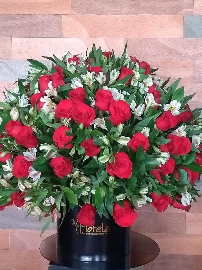 Eleonor 100 rosas