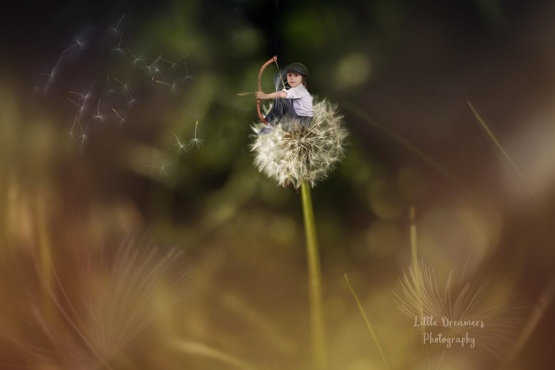 Golden Hour Dandelion