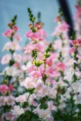 Seasonal Flower Box - July