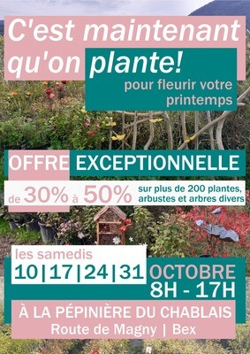 C'est maintenant que l'on plante !