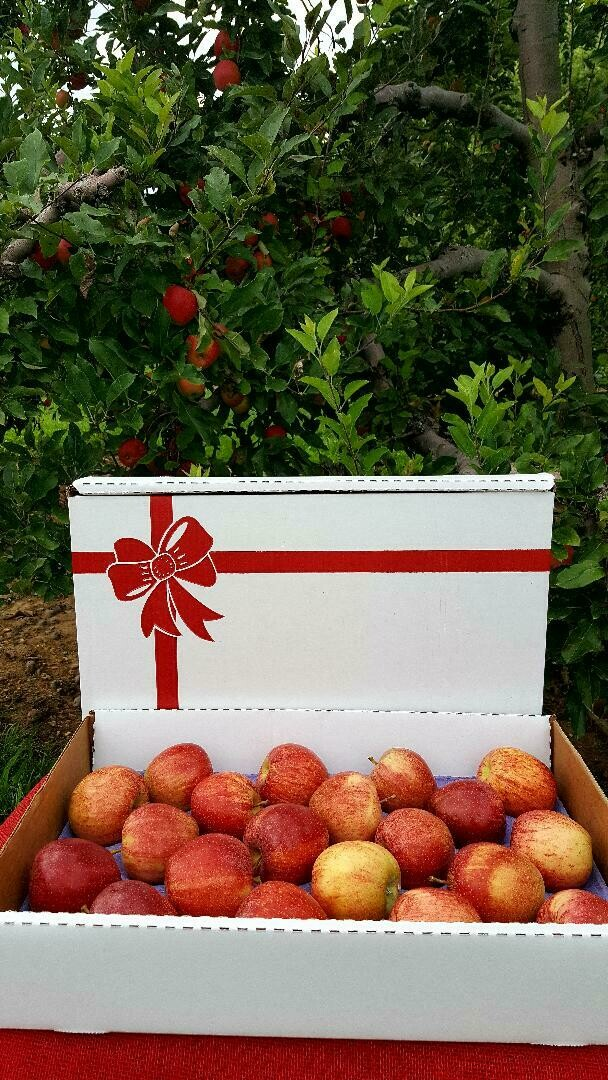 Gala Apple Gift Box - 20 count