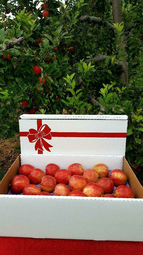 Apple Gift Box - 40 count