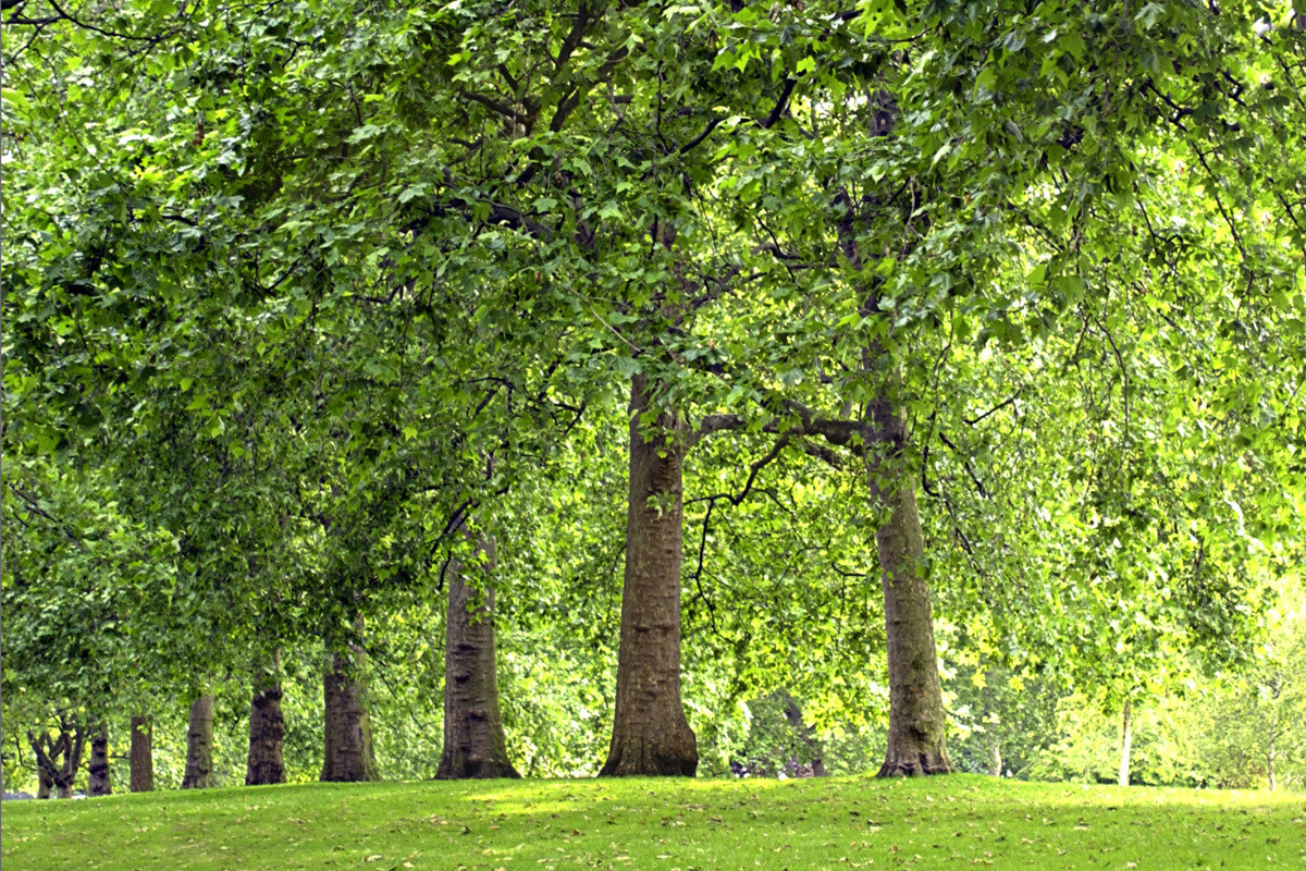 Tree Survey Plus