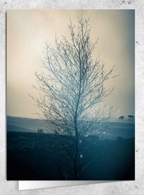 'arbor natalis ' -  CHRISTMAS TREE - 105 x 75 mm