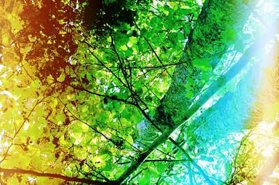 Summer Earth