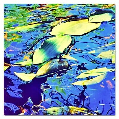 Duckweed (Lemna minor) - FINE ART CARD  5 x 5