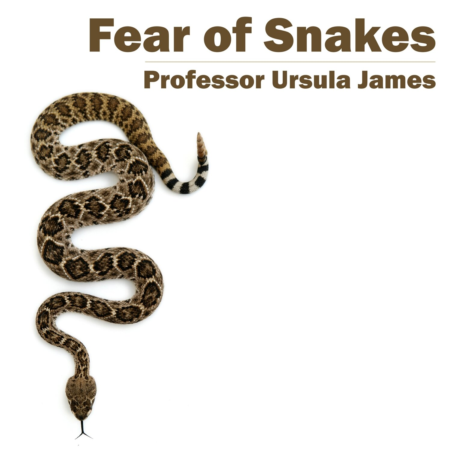 Fear of Snakes MP3
