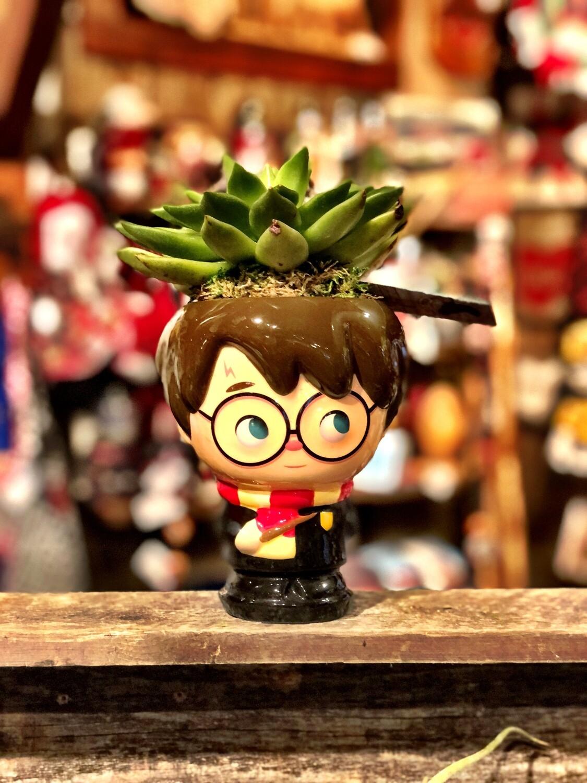 Harry Potter Succulent