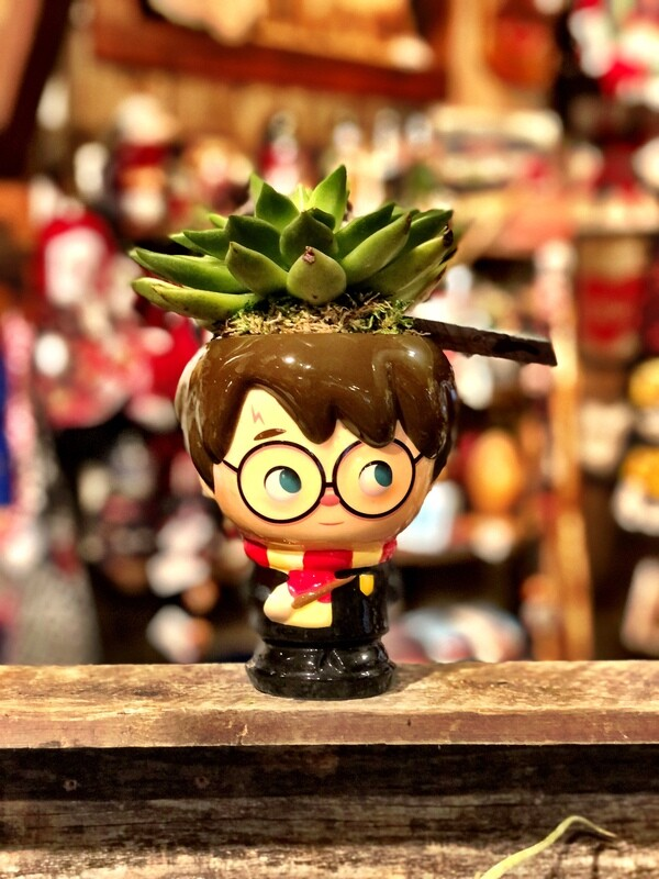 Harry Potter Succulent