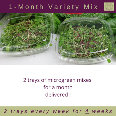 1-Month Micro Bundle - Pick Your Favourite