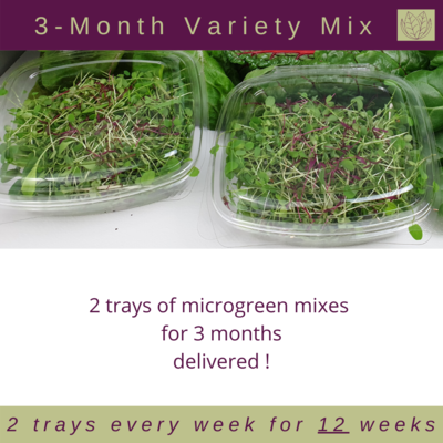 3-Month Micro Bundle - Pick Your Favourite