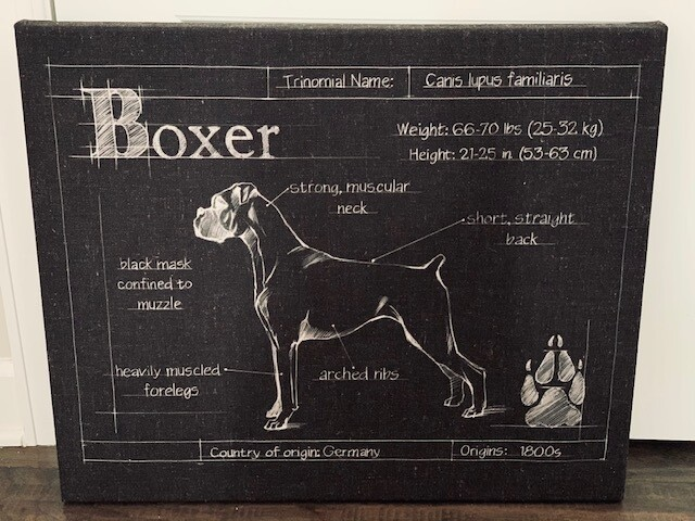 Boxer Blueprint Wrapped Canvas Art