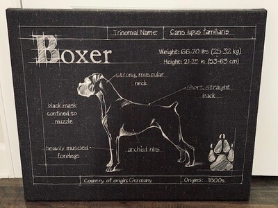 Boxer Blueprint Wrapped Canvas Art