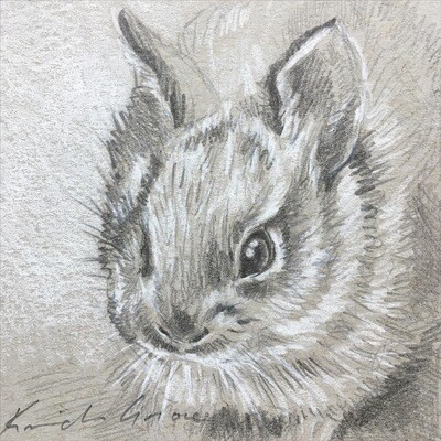 Baby Bunny II, Nuttall's Cottontail