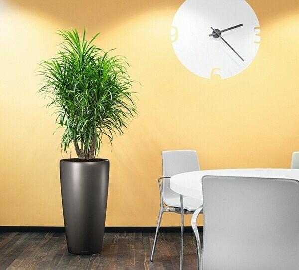 Office Plants Toronto