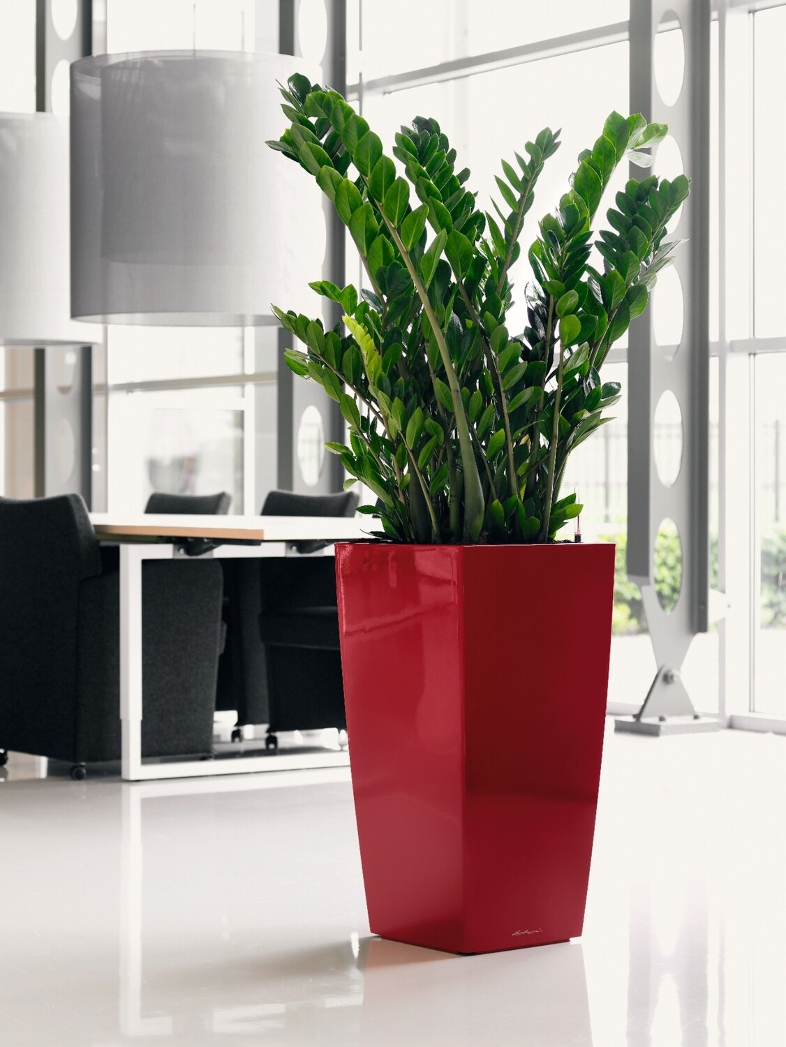 Office plants ZZ plants in red planter