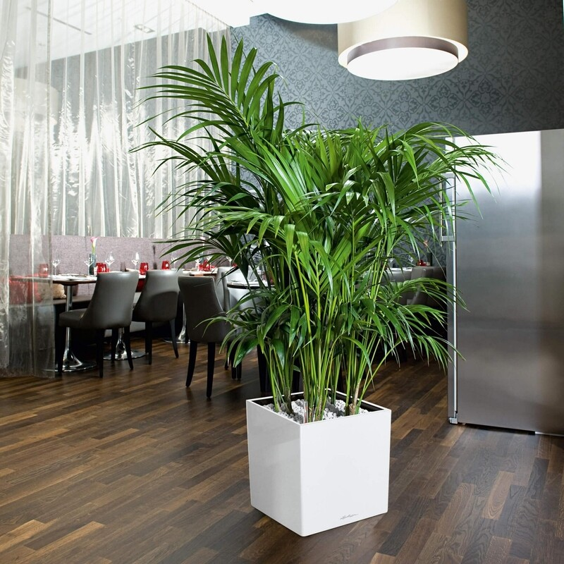Indoor palm in Lechuza self watering planter