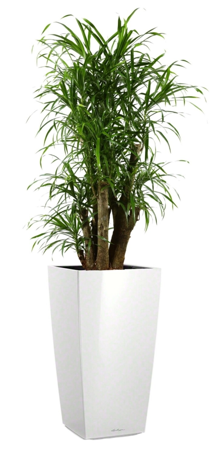 Tall planter with plants