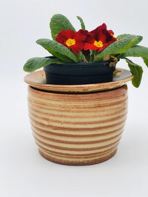 Violet pot
