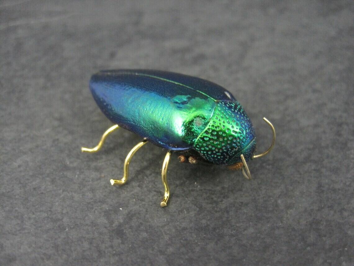 Estate Victorian Revival Jewel Beetle Brooch Metallic Wood Bug Buprestidae