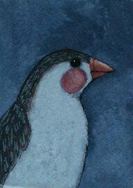little finch bird portrait 2.5x3.5