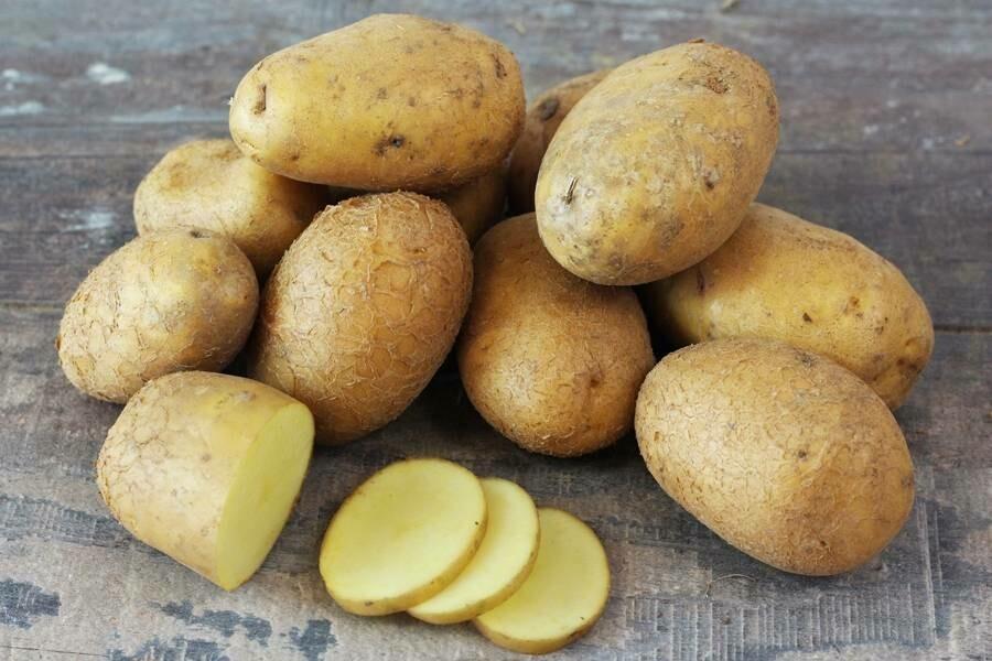 Pomme de terre ferme Bio Suisse