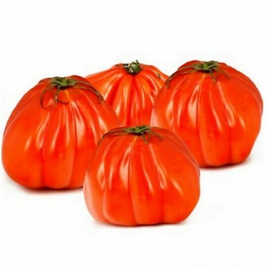Tomate coeur de boeuf Bio Suisse