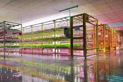 Plant Factory