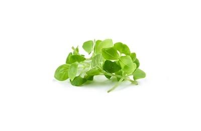 Green Basil 200g