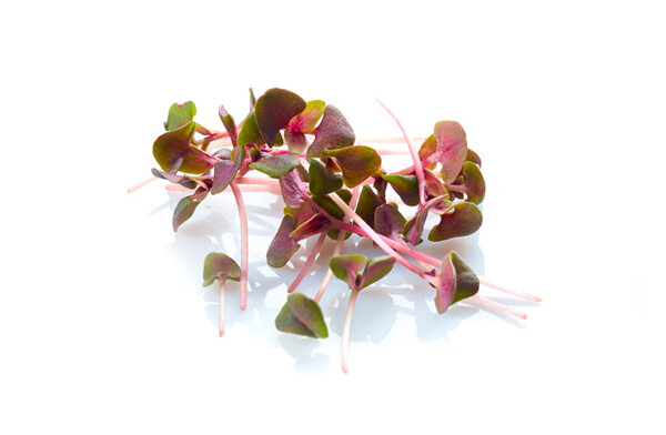 Red Rubin Basil 200g