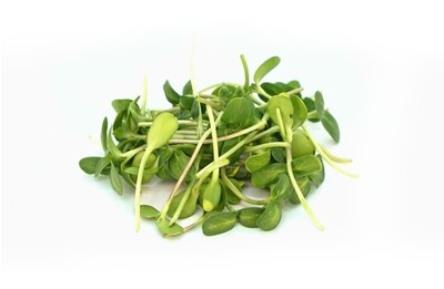 Sunflower Sprouts 200g